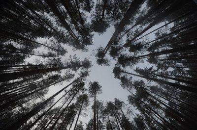 フィンランド 森と空