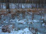 フィンランド 冬の気候
