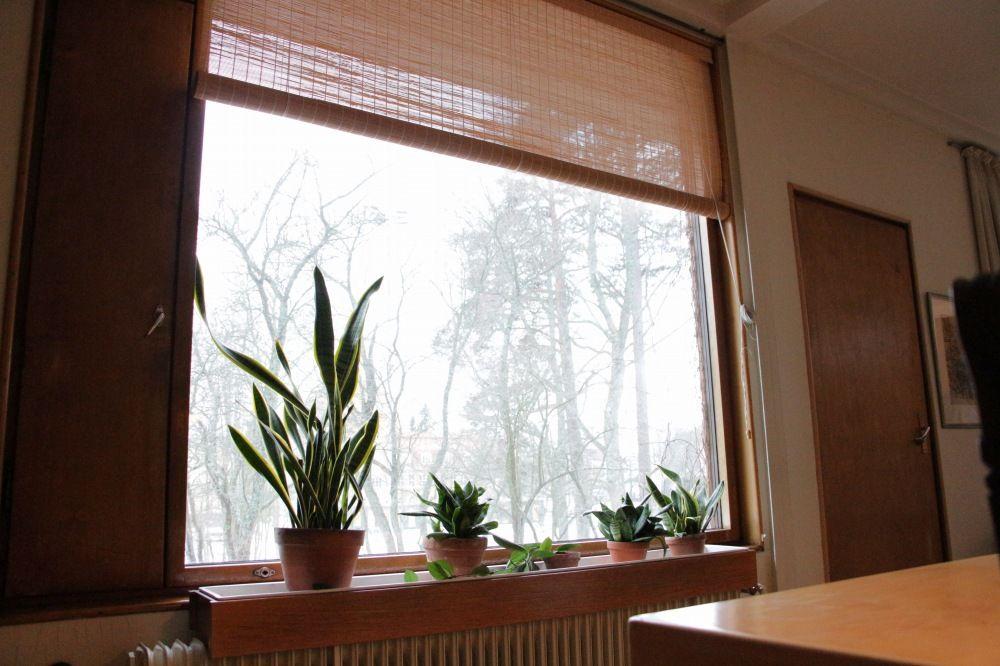 アルヴァ・アールト自宅にある庭に向ける窓