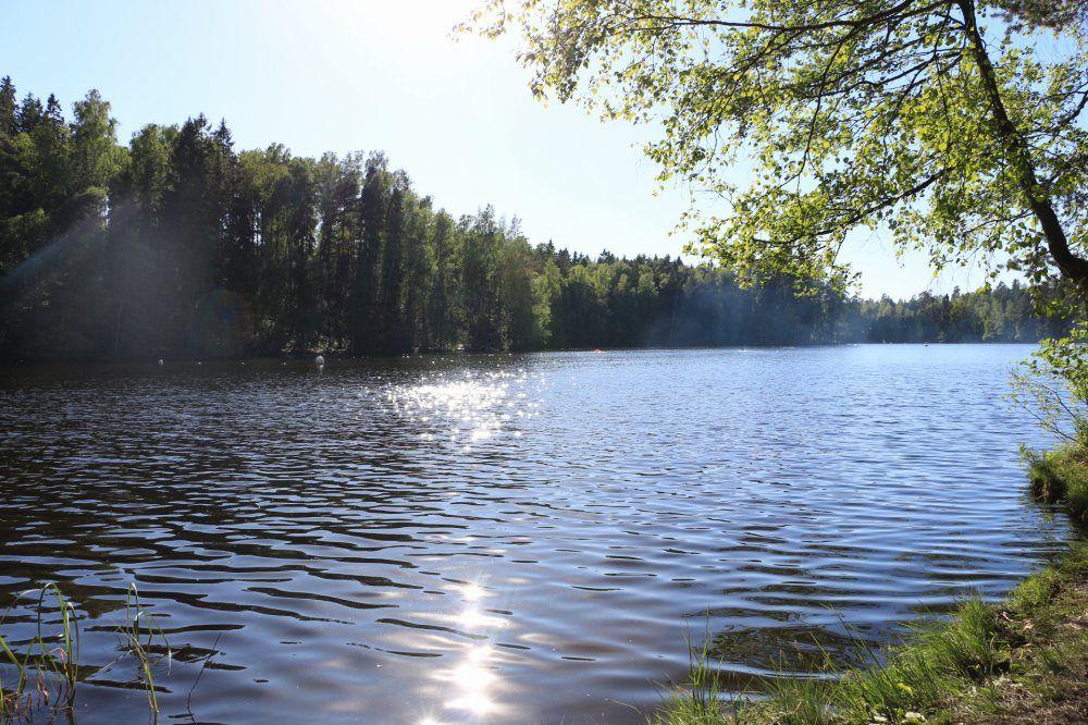 フィンランド夏の森と湖