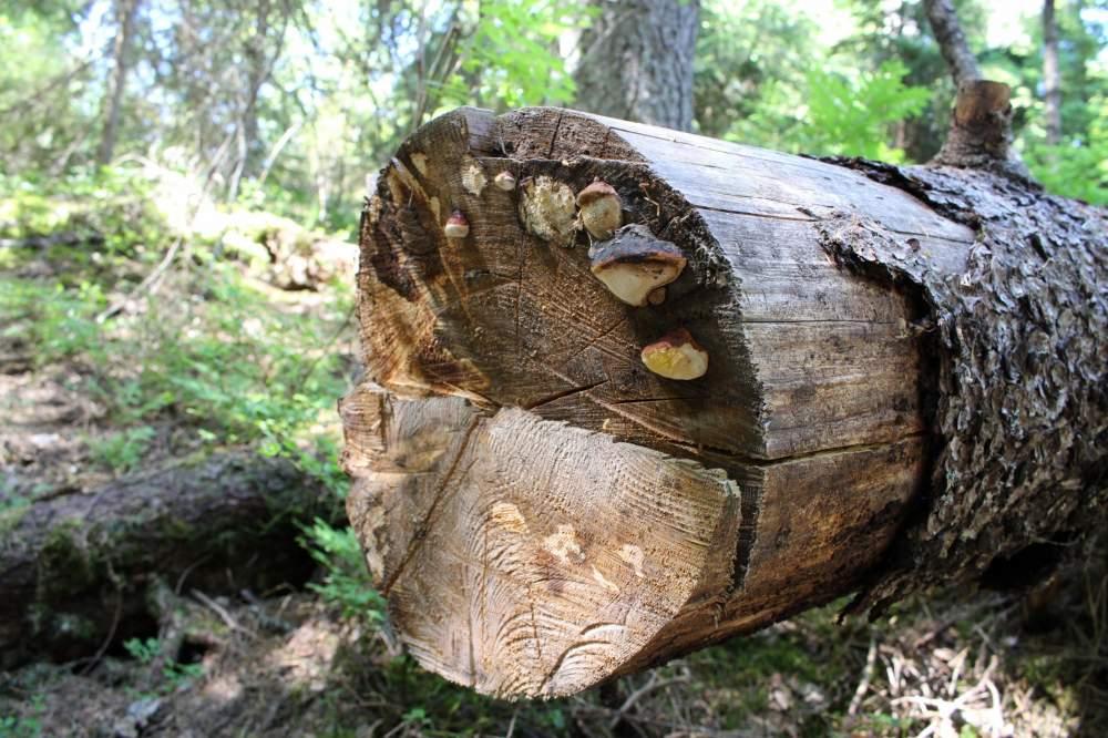 ヌークシオ国立公園の倒木とキノコ