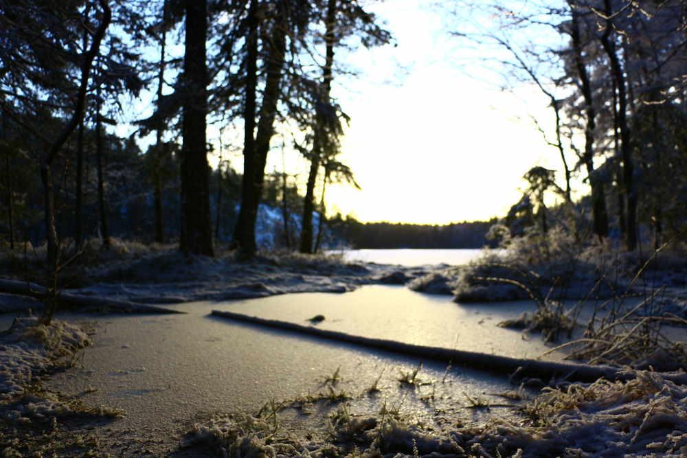 凍結した湖、光を反射する雪、暗い森、輝く太陽と青空からなる絶景