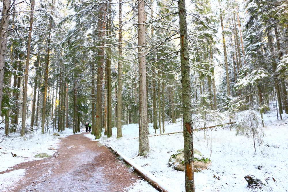 冬のLuukkiハイキングルート(12月)