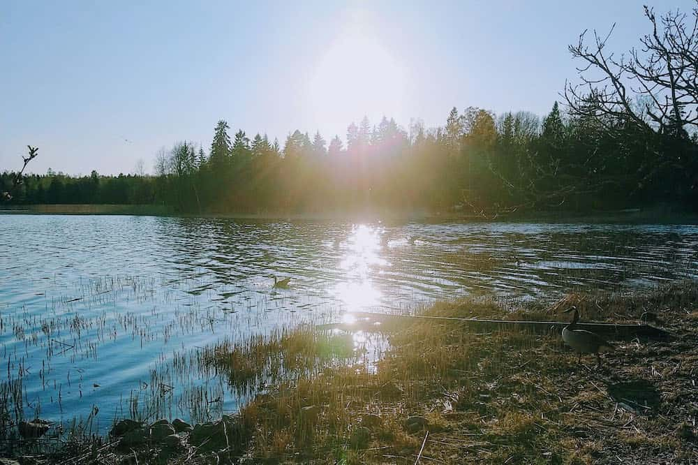 フィンランドの夜の景色