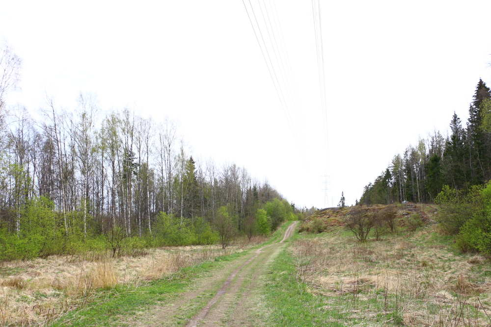 ヘルシンキMustavuoriの散策路も広くて歩きやすい